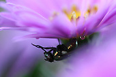 Flower and Fly