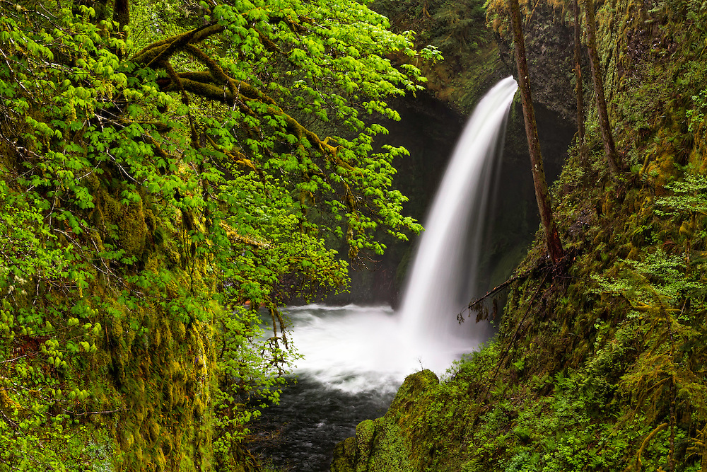 Metlako Falls in the Columbia River Gorge plunges into Eagle Creek early on a cool, rainy Spring morning.