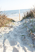 Beach path through the sand on Sullivan's Island, South Carolina.