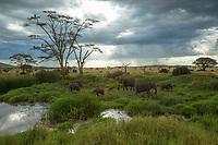Serengeti National Park<br /> Tanzania, Africa