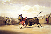 Bullfighting: Bull charging as matador plays the cape.  Lake Price (c1810-1896) English artist.  Spain Corrida Torero Tradition Costume Blood Sport Spectacle