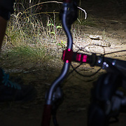 A rattle snake hanging out on the singletrack in the dark.