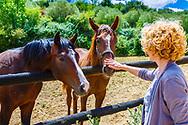 Horses on a farm. Dicastillo. Estella comarca, Navarre. Spain, Europe.