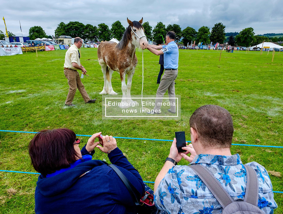 Biggar, South Lanarkshire, Scotland 23 July 2016<br /> <br /> Judging horses in the show ring.<br /> <br /> (c) Andrew Wilson | Edinburgh Elite media