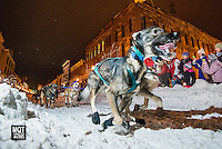 The start of the 2015 U.P. 200 Sled Dog race in downtown Marquette, in the Upper Peninsula of Michigan.