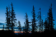The crescent moon shines between trees at the top of a ridge near Hurricane Ridge in Olympic National Park, Washington.