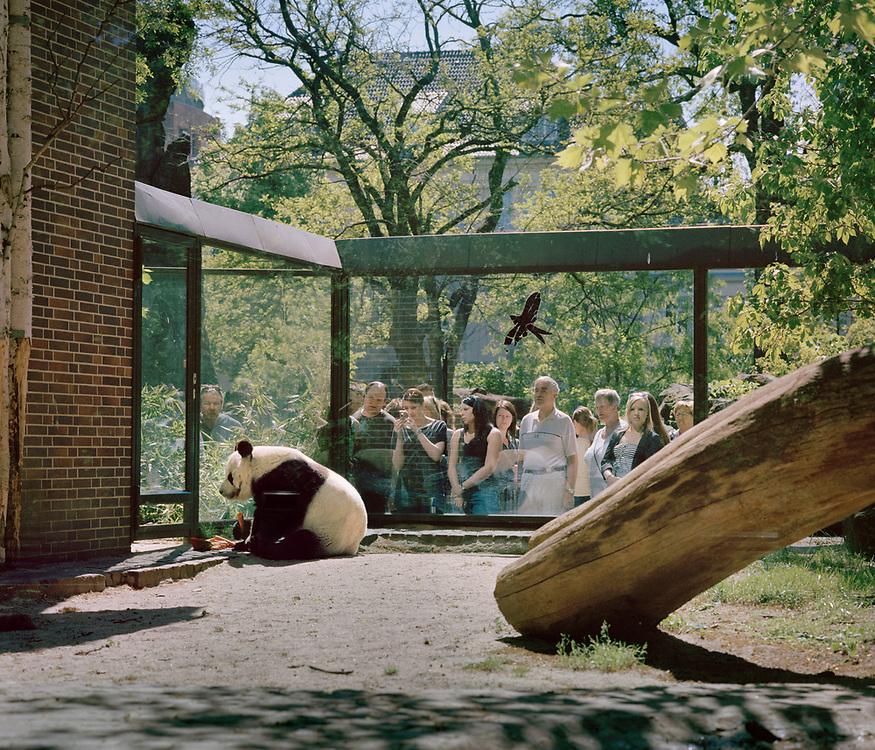 Giant Panda, Berlin Germany.