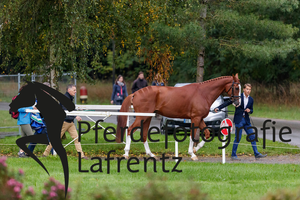 LIPS Tim (NED), HERBY<br /> Le Lion d'Angers - FEI Eventing World Breeding Championship 2019<br /> Holding Box<br /> 2. Verfassungsprüfung<br /> 20. Oktober 2019<br /> © www.sportfotos-lafrentz.de/Stefan Lafrentz