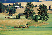 THIS PHOTO IS AVAILABLE FOR WEB DOWNLOAD ONLY. PLEASE CONTACT US FOR A LARGER PHOTO.. Idaho. Lewiston - Genesee. AG - farm, trees, hay, fields, scenic. Summer, afternoon