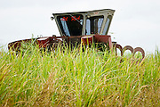 15 NOVEMBER 2005 - FRANKLIN, LA:  JESSE BREAUX operates his cane cutter while another cane cutter passes him on his sugar cane farm near Franklin, Louisiana during the 2005 sugar cane harvest. Breaux sells his cane through the St. Mary Sugar Co-op in St. Mary Parish. Louisiana is one of the leading sugar cane producing states in the US and the economy in southern Louisiana, especially St. Mary and Iberia Parishes, is built around the cultivation of sugar. Sugar growers in the area are concerned that trade officials will eliminate sugar price supports during upcoming trade talks for the proposed Free Trade Area of the Americas (FTAA). They say elimination of price supports will devastate sugar growers in the US and the local economies of sugar growing areas. They also say it will ultimately lead to higher sugar prices for US consumers.  PHOTO BY JACK KURTZ