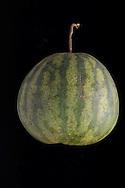 .Melon