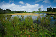 Fresh Water wetland area for waterfowl and coastal birds.