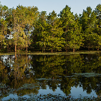 Brazos Bend State Park, Texas