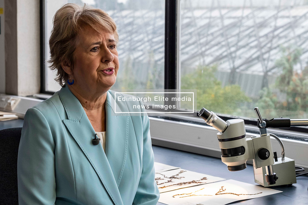 Pictured: Roseanna Cunningham<br />
