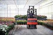 Nederland, Huissen, 10-12-2011 Een moderne kas in het kassen gebied Bergerden. Hier worden alleen Anthuriums gekweekt. Foto: Flip Franssen/Hollandse Hoogte