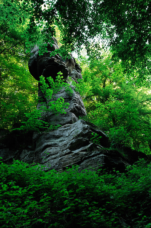 Tour Malakoff and beech trees (Fagus sylvatica), Mullerthal trail, Mullerthal, Luxembourg