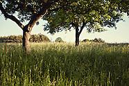 Landschaft Südburgenland, Mai 2013