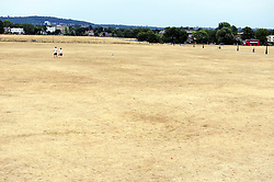 &copy; Licensed to London News Pictures. 20/07/2018<br /> Blackheath, UK. Burnt dry grass on Blackheath Common in London, caused by a prolonged heatwave and dry period across the south of England. Photo credit: Grant Falvey/LNP