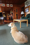 Rosie the Lab relaxes in a historic hunting camp on the Delta Marsh in Manitoba.