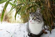 En katt i bambuskogen p&aring; Tashirojima. &Ouml;n som kallas f&ouml;r &quot;katt&ouml;n&quot; eftersom h&auml;r lever hundratals katter tillsammans med ca 50 personer.   <br /> Ishinomaki, Miyagi Prefecture, Japan. <br /> Fotograf: Christina Sj&ouml;gren<br /> Copyright 2018, All Rights Reserved