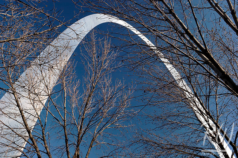 Bare Tree Branches and The Gateway Arch, Saint Louis, Missouri