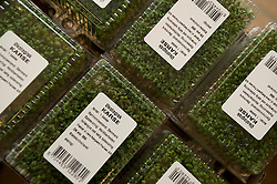 Picture by Mark Larner. Picture shows organic watercress at KBHff Indre By. 14/03/2012