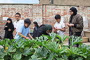 Maslaha working with Year 3 students at The Beeches Primary School in Peterborough. Growing food in the school garden and engaging children and parents to improve food quality.  Peterborough, UK.