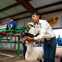 Dally Carlisle, 16, showing his lamb Friday, August, 31, 2018 at the Bi-County Fair in Prewitt.
