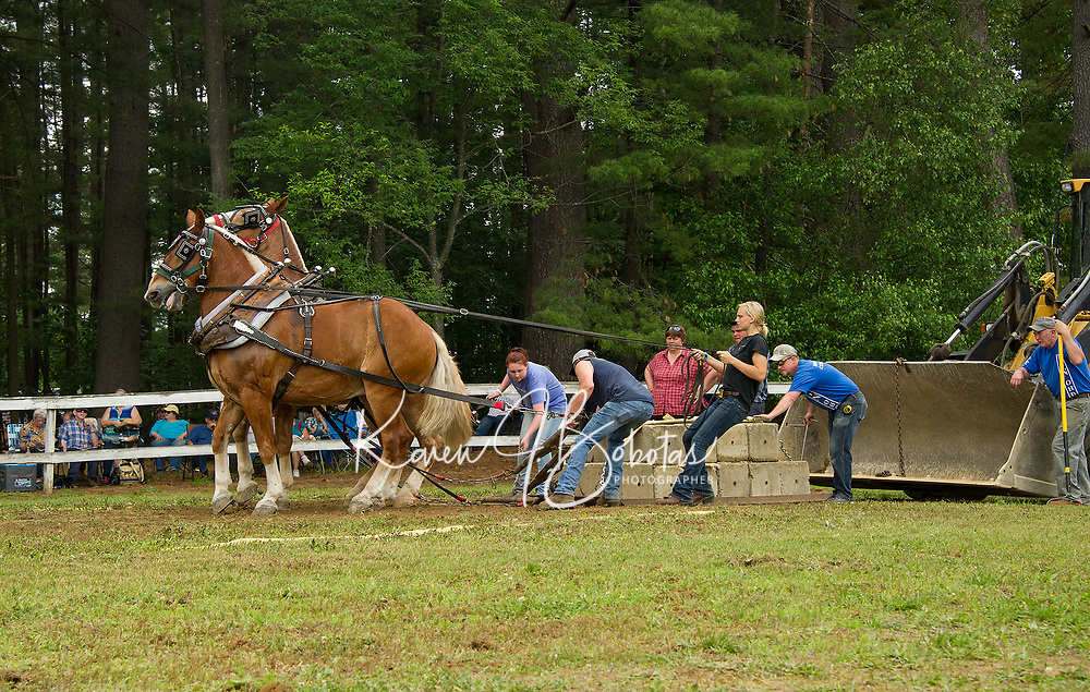 Teams compete in the horse pulling event during Tilton-Northfield's Old Home Day on Saturday. (Karen Bobotas/for the Laconia Daily Sun)
