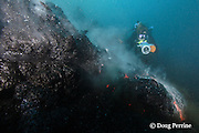 shimmering heat waves rising off erupting pillow lava <br /> distort the image of videographer Shane Turpin, filming underwater eruption at Kilauea Volcano, Hawaii Island (&quot; the Big Island &quot;), Hawaii, U.S.A. ( Central Pacific Ocean ) <br /> MR 352