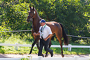 Jiri Nesvacil, (CZE), Arnie, Carmen 17, Putin, Weekend - Horse Inspection Driving - Alltech FEI World Equestrian Games™ 2014 - Normandy, France.<br /> © Hippo Foto Team - Leanjo de Koster<br /> 25/06/14