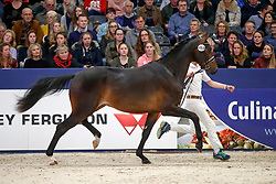 468, King US<br /> KWPN Stallionshow - 's Hertogenbosch 2018<br /> © Hippo Foto - Dirk Caremans<br /> 02/02/2018