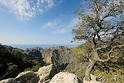 Habitat of Majorcan midwife toad (Alytes muletensis). Torrent de s'Esmorcador, Majorca, Spain. The Majorcan midwife toad (Alytes muletensis) is endemic to the rocky sandstone terrain of the Serra de Tramuntana in the northwest of Majorca. Majorca, Spain | Die Mallorca-Geburtshelferkröte (Alytes muletensis) lebt ausschließlich in der Sandstein-Felslandschaft der Serra de Tramuntana im Nordwesten Mallorcas. Erst im Abendlicht erreichen die Wissenschaftler wieder die Straße, von der aus sie, die eingefangenen Kaulquappen im Gepäck, mit dem Auto nach Las Palmas zurückkehren.