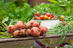 Harvested tomatoes and beetroot in the vegetable garden