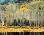 Aspens and Beaver Pond, San Juan Mountains, Colorado