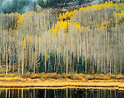 Aspens and Beaver Pond, San Juan Mountains, Colorado