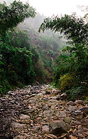 Looking up a dry stream bed in the early morning mist north of Guilin.