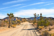 Dirt Road to Keys Ranch at Joshua Tree National Park