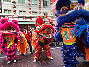 """08 FEBRUARY 2016 - BANGKOK, THAILAND:  Lion dancers perform for Chinese New Year on Yaowarat Road in Bangkok's Chinatown district, during the celebration of the Lunar New Year. Chinese New Year is also called Lunar New Year or Tet (in Vietnamese communities). This year is the """"Year of the Monkey."""" Thailand has the largest overseas Chinese population in the world; about 14 percent of Thais are of Chinese ancestry and some Chinese holidays, especially Chinese New Year, are widely celebrated in Thailand.      PHOTO BY JACK KURTZ"""