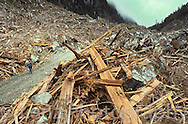 """This is a so-called """"alternative logging operation"""" by Macmillan Bloedel from 1991. The company issued a press release stating that this was an example of """"World class alternative logging,"""" """"The best that we can do."""""""
