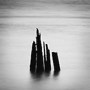 Mooring Dolphin, Columbia River, Megler, Washington. Hundred-year-old pilings along the Columbia River, that once supported a thriving fish processing and packing industry around Astoria, Oregon, USA.