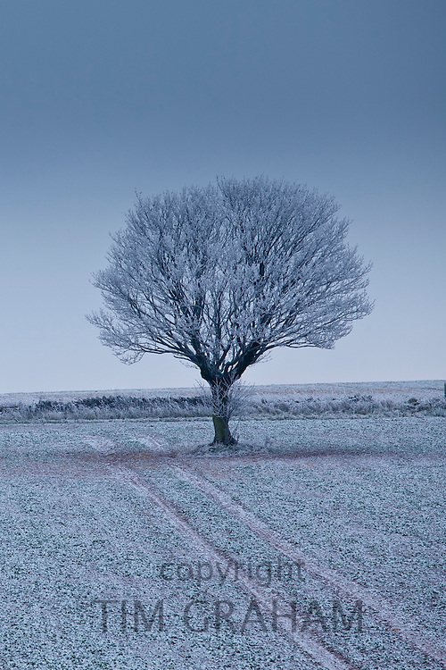 Hoar frost on tree and field in frosty wintry landscape in The Cotswolds, Oxfordshire, UK