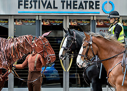 Joey, the life-sized puppet horse from the hit production of War Horse, arrived outside the Festival Theatre in Edinburgh with actor Thomas Dennis, who plays Albert, where he met up with police horses Lewis and Kilmarnock, ridden by PC Kaeren Muir (back) and PC Claire Hunter (front)<br /> <br /> &copy; Dave Johnston/ EEm
