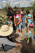 Pamela Pelletier, (bottom left), leads students from Drachman Elementary School on a cactus count at the Desert Laboratory at Tumamoc Hill at the University of Arizona, Tucson, Arizona, USA.