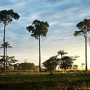 lever du jour en amazonie