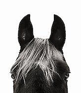 Horse Head in black and white.