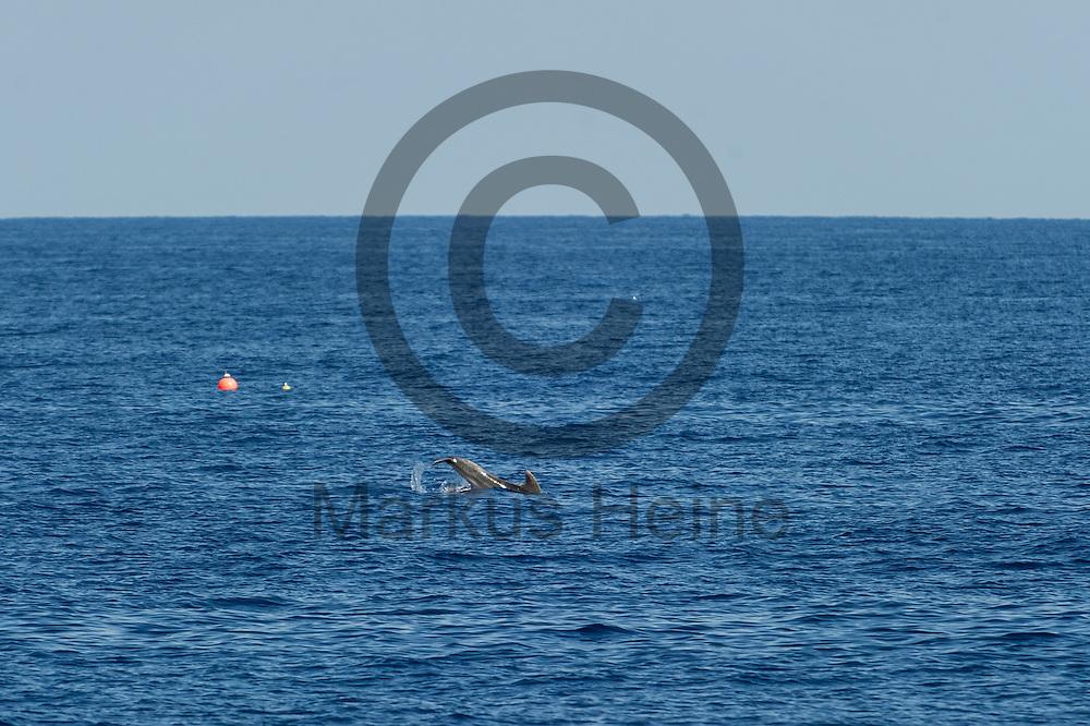 Ein Delfin schwimmt am 22.09.2016 neben dem Fluechtlingsrettungsboot Sea-Watch 2 in internationalen Gewaessern vor der libyschen Kueste. Foto: Markus Heine / heineimaging<br /> <br /> ------------------------------<br /> <br /> Veroeffentlichung nur mit Fotografennennung, sowie gegen Honorar und Belegexemplar.<br /> <br /> Publication only with photographers nomination and against payment and specimen copy.<br /> <br /> Bankverbindung:<br /> IBAN: DE65660908000004437497<br /> BIC CODE: GENODE61BBB<br /> Badische Beamten Bank Karlsruhe<br /> <br /> USt-IdNr: DE291853306<br /> <br /> Please note:<br /> All rights reserved! Don't publish without copyright!<br /> <br /> Stand: 09.2016<br /> <br /> ------------------------------