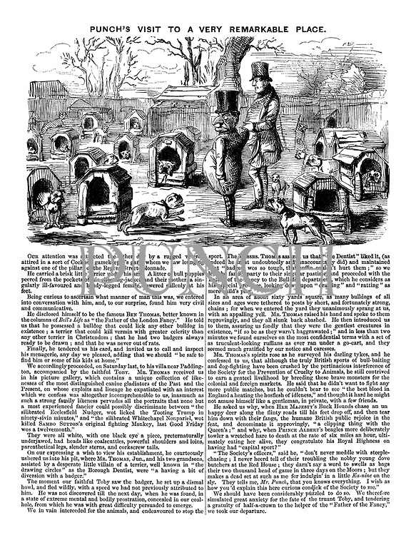 Punch's Visit To A Very Remarkable Place. (cartoon and article showing Mr Punch at a Victorian dog breeder)