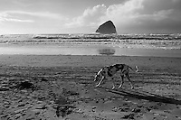Haystack Rock @ Cape Kiwanda, Pacific City