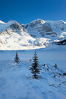 Mount Andromeda in winter seen from the glacial plain of the SunwaptaRiver, Jasper National Park Alberta Canada